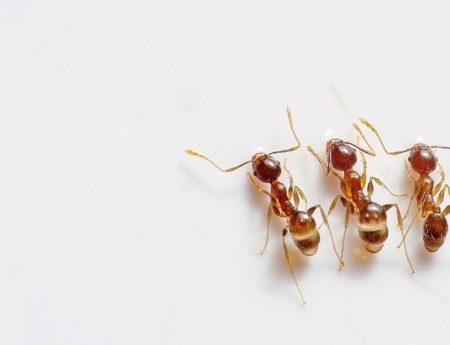 Ants 450x345